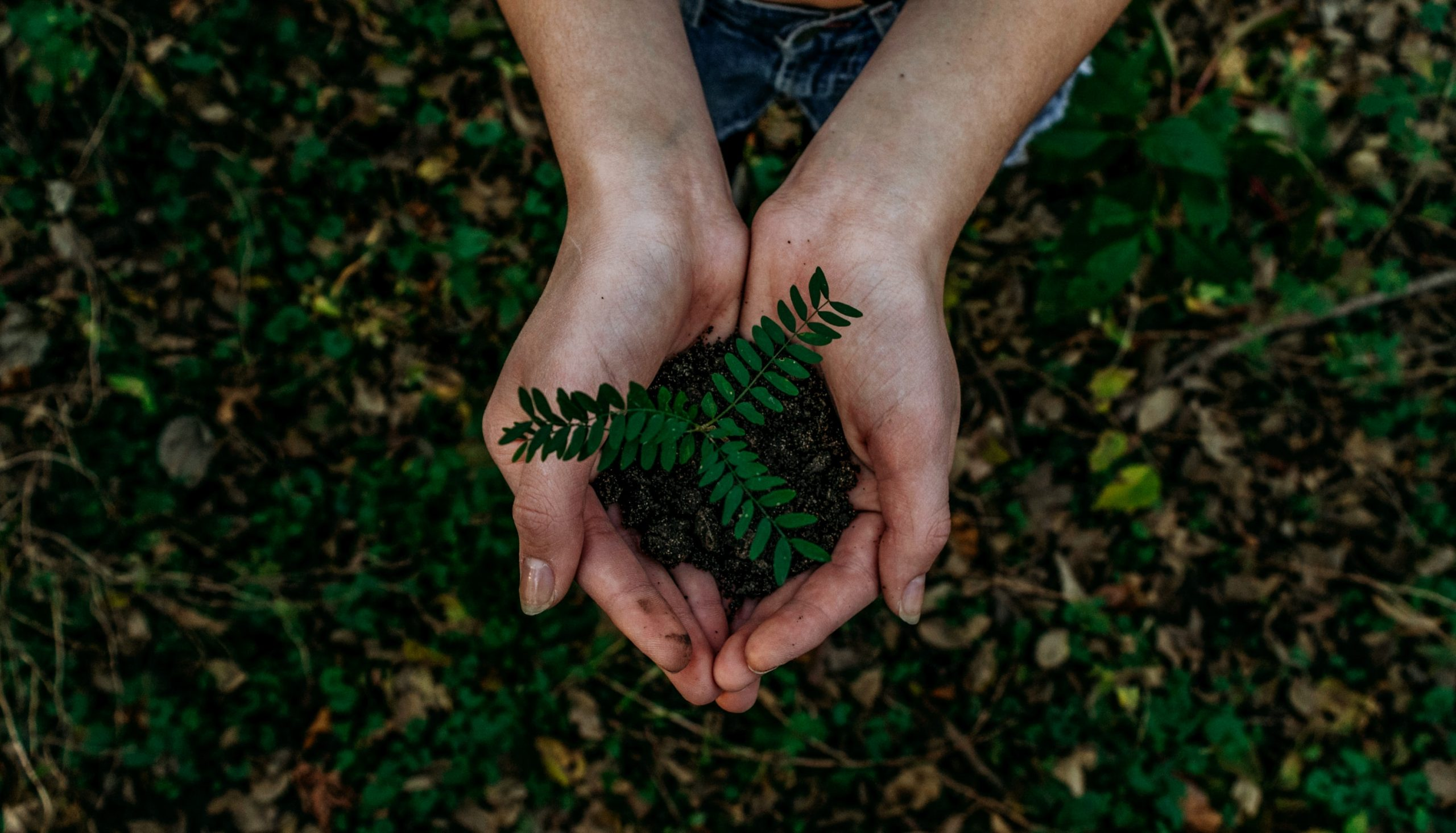 Why Impact Investing is Great for Both the Planet and Company Profits - N'Gunu Tiny